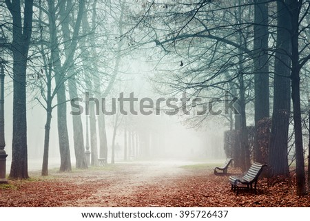 Misty park in autumn. Benches under high trees. Parma, Italy. - stock photo
