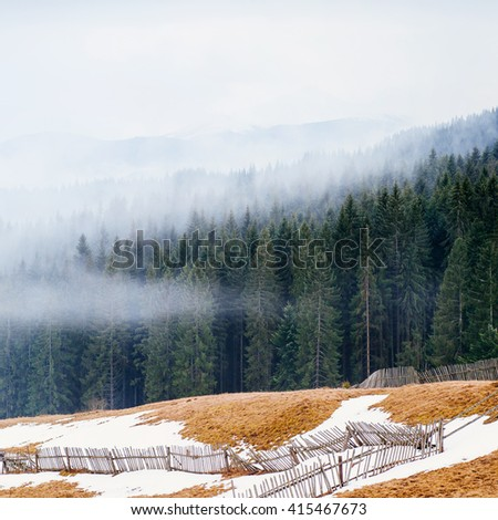 Misty pine forest on the slopes of the Ukrainian Carpathians. Fabulous mountain landscape - stock photo