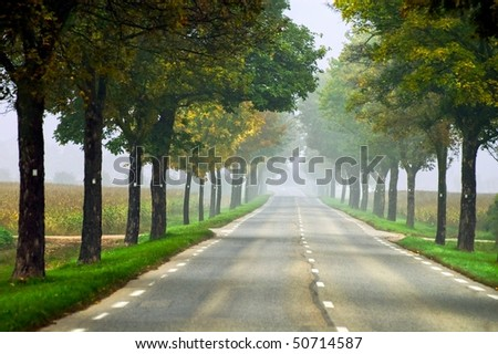 Misty road in Alsace, France, on a foggy summer day - stock photo