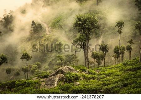 Misty road on tea plantation in Sri Lanka - stock photo