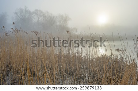 Misty shore of a lake at sunrise in winter - stock photo