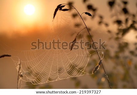 misty sunrise and spiderweb in autumn - stock photo