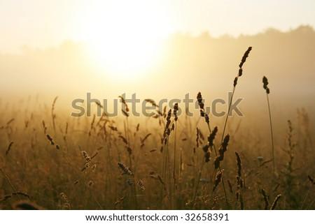 Misty sunrise over grass - stock photo