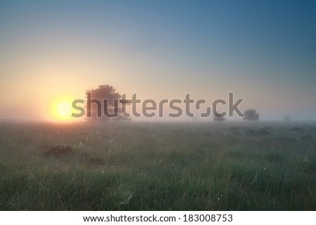 misty sunrise over summer marsh, Drenthe, Netherlands - stock photo