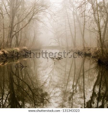 Misty Swamp - stock photo