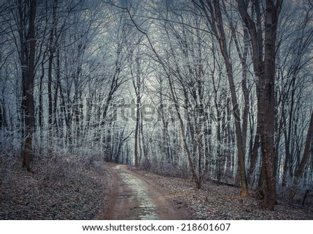 Misty trail in autumn forest. Retro style. - stock photo