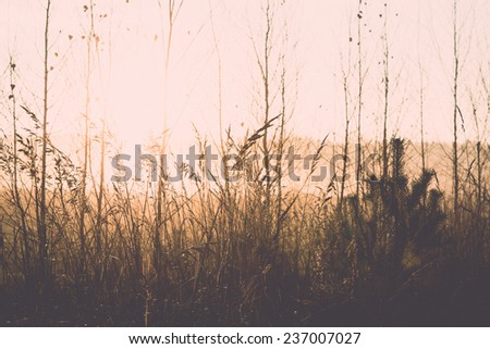misty tree branches in bright sunlight in countryside - retro, vintage style look - stock photo