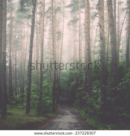 misty tree branches in bright sunlight in forest - retro, vintage style look - stock photo