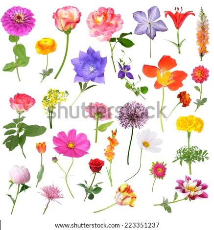 mix beautiful flowers isolated on white background  - stock photo