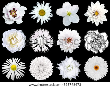 Mix collage of natural and surreal white flowers 12 in 1: peony, dahlia, primula, aster, daisy, rose, gerbera, clove, chrysanthemum, cornflower, flax, pelargonium isolated on black - stock photo