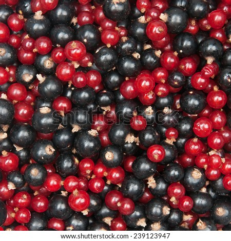 mix of redcurrant and  blackcurrant - stock photo