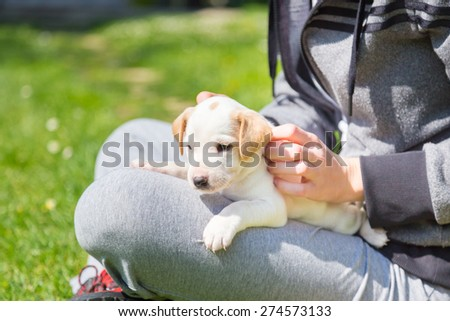 Mixed-breed adorable cute little puppy petting in a lap of a female owner, outdoors on a meadow on a sunny spring day. - stock photo