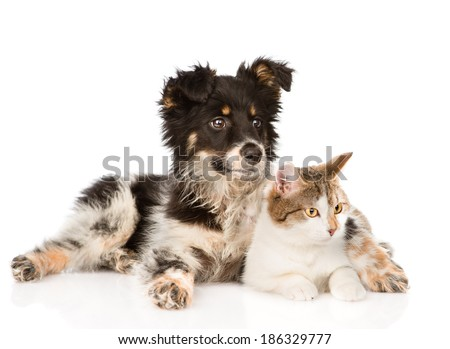 mixed breed dog and cat looking away. isolated on white background - stock photo