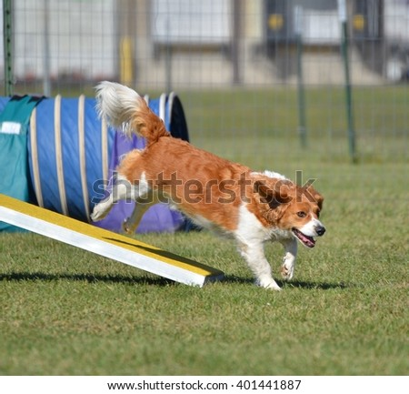 Mixed-Breed Dog Jumping off a Teeter-Totter at a Agility Trial - stock photo