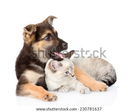 mixed breed dog lying with small cat. isolated on white background - stock photo
