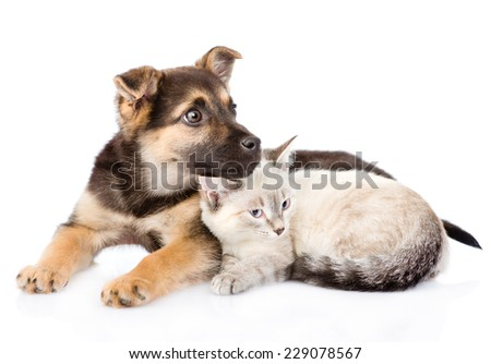 mixed breed dog lying with small cat together. isolated on white background - stock photo