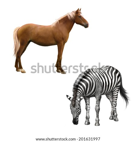 Mixed breed horse standing, zebra bent down eating grass . Vector isolated on white background - stock photo