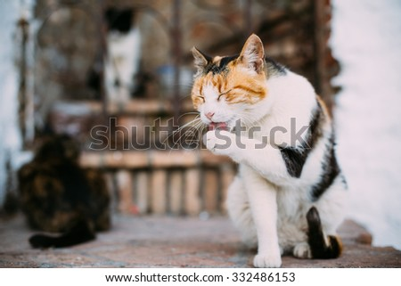 Mixed Breed White and Red Cat Lick Washes Itself Outdoor - stock photo