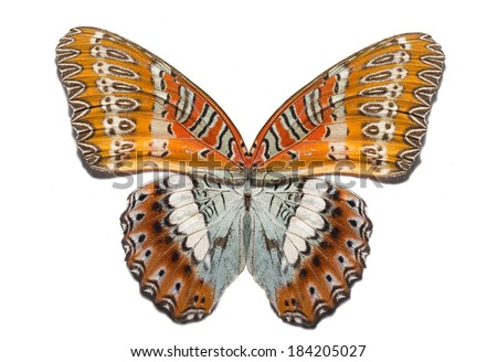 Mixed butterfly isolated - stock photo