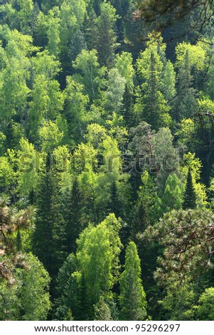 mixed forest - stock photo