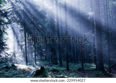 Mixed Forest in the Morning Light - stock photo