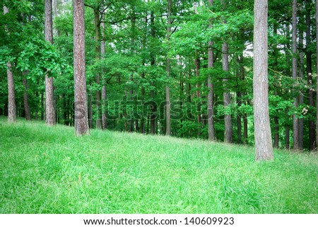 Mixed forest with thick grass in springtime - stock photo