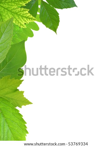 Mixed - Green Leaf Frame - stock photo