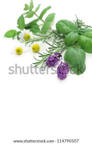 Mixed Herbs on white background - stock photo
