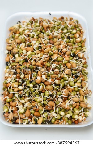 Mixed sprouts Seeds of green gram, flax seed in white tray.New life concept seed germination. condiment for cooking/ feed for domestic animals. Heart healthy oil/ fat free Protein rich food  - stock photo