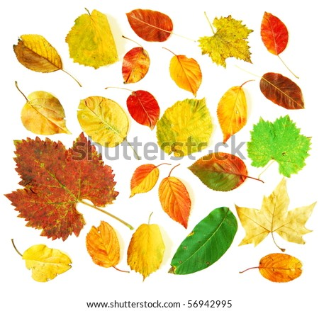 Mixture of autumnal leaves photographed on white background - stock photo