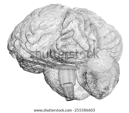 model brain in  projections , body structure, wire model - stock photo