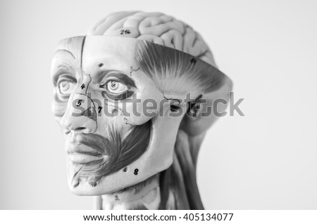 model of human anatomy with black and white color - stock photo