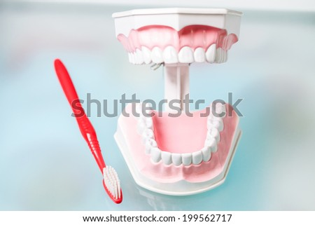 Model of jaws and a toothbrush - stock photo