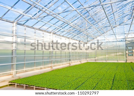 modern  Interior of a greenhouse - stock photo