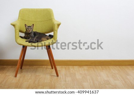 modern style armchair with a cat - stock photo