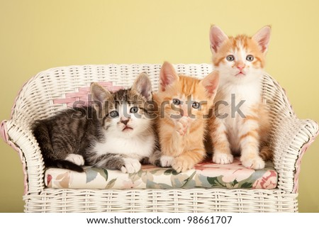 Moggie kittens on miniature white wicker bench yellow green background - stock photo