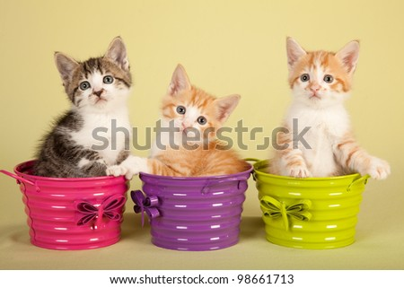Moggie kittens sitting inside colorful pails buckets on yellow green background - stock photo