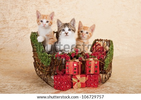 Moggie kittens with Christmas sleigh sled on beige background - stock photo
