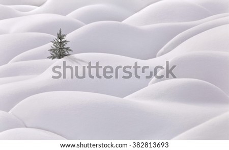 Moguls and tree evergreen white snow hills - stock photo