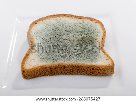 Mold growing rapidly on moldy bread in green and white spores - stock photo