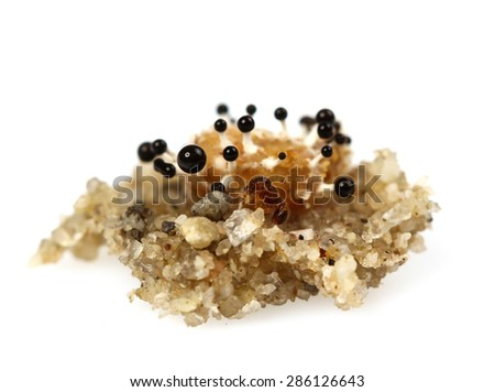 Mold, macro view isolate on white - stock photo