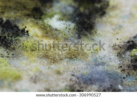 Mold Which has appeared on food, organic food - stock photo