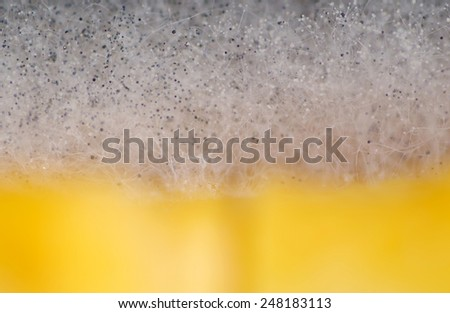Mold Which has appeared on food, organic food, blur - stock photo