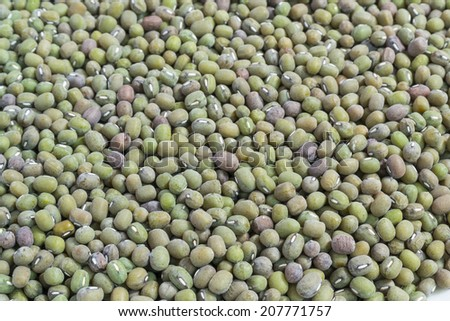moldy ymung bean grams close up view - stock photo