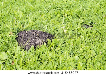 Mole mound in the field, green fresh grass background - stock photo