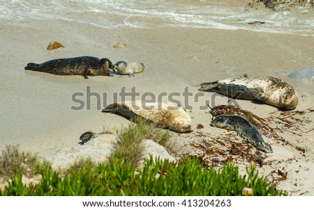 Mom and baby sea lions - stock photo