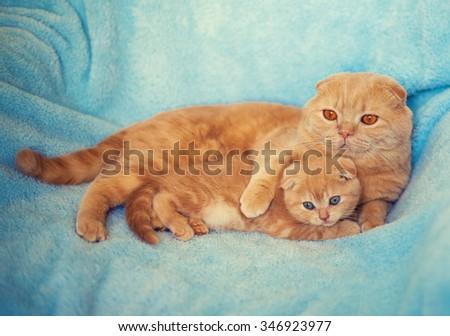 Mom cat hugging little kitten, lying on blue  blanket - stock photo
