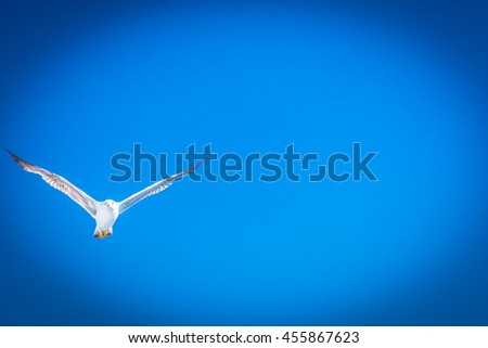Moment in flight of seagull with wingspread over Adriatic sea. / Seagull blue sky background. / Selective focus. - stock photo