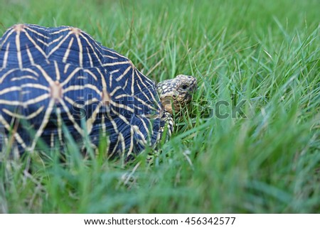 moment of turtle in garden - stock photo