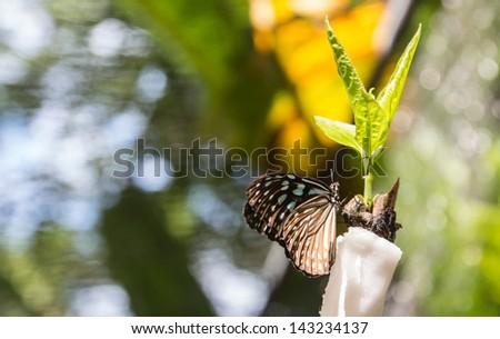 Monarch butterfly  in flowers garden - stock photo